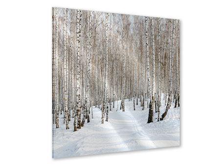 Acrylglasbild Birkenwald-Spuren im Schnee
