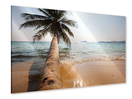 Acrylglasbild Palme