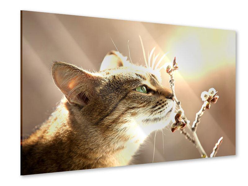 Acrylglasbild Die Katze