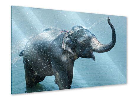 Acrylglasbild Der junge Elefant