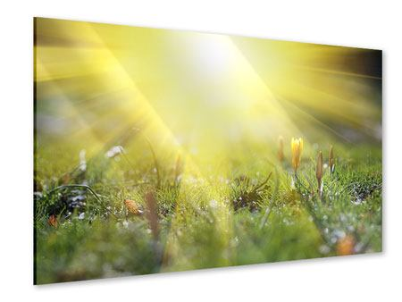 Acrylglasbild Blumige Wiese