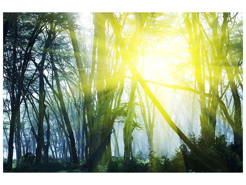 Acrylglasbild Sonnenstrahlen im Wald