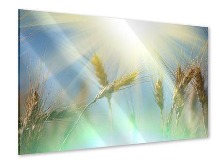 Acrylglasbild König des Getreides