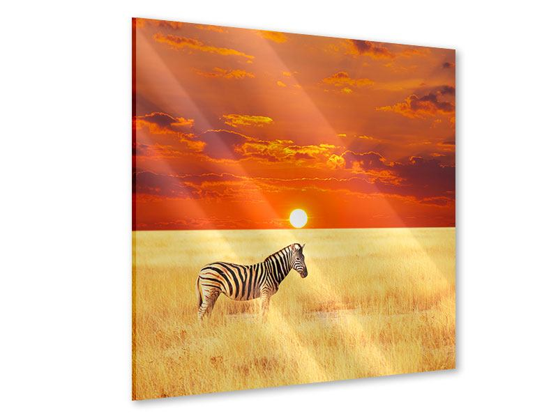 Acrylglasbild Zebra im Seregenti-Nationalpark
