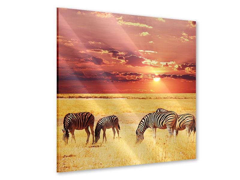 Acrylglasbild Zebras in der Savanne