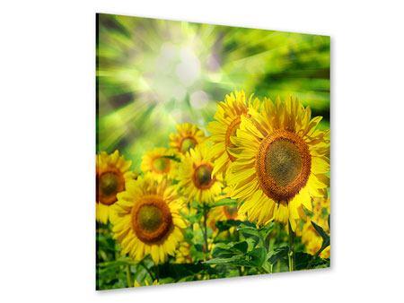 Acrylglasbild Die Sonne und die Blumen