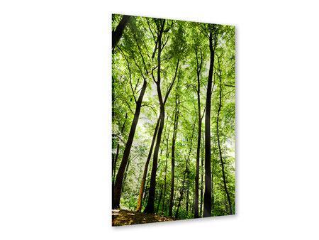 Acrylglasbild Wald