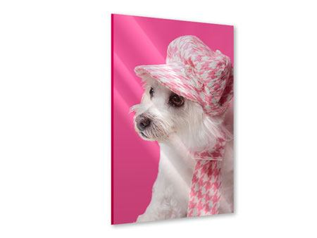Acrylglasbild Pretty Dog In Pink