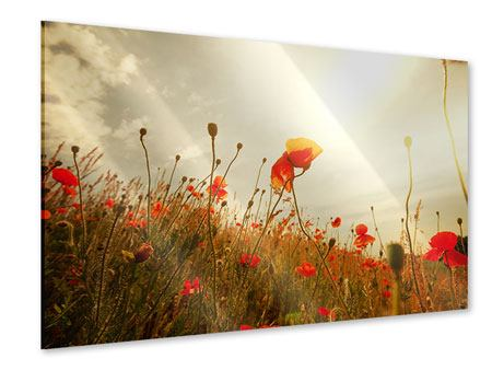 Acrylglasbild Das Mohnfeld bei Sonnenaufgang