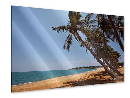 Acrylglasbild Palmblätter