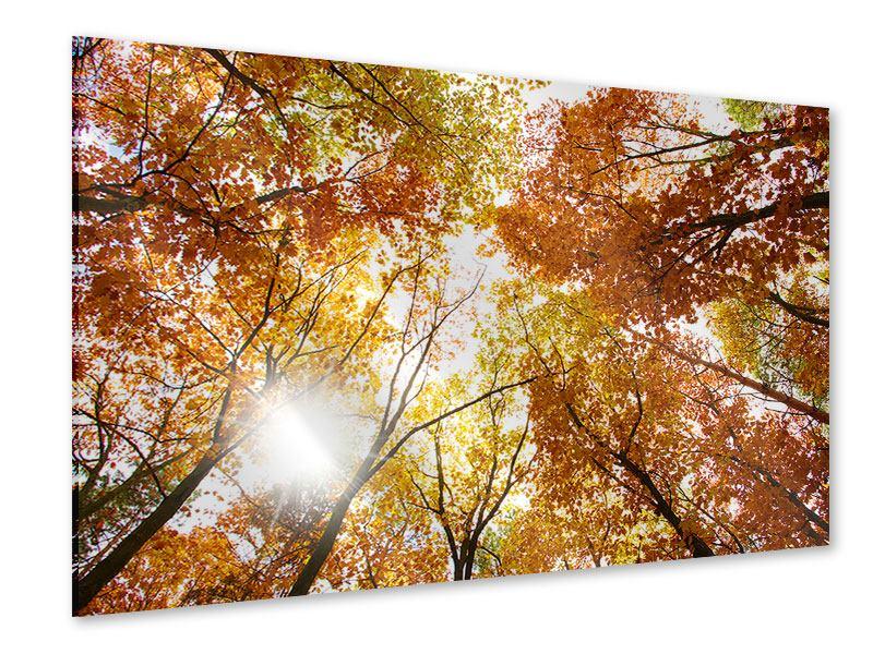 Acrylglasbild Herbstbäume