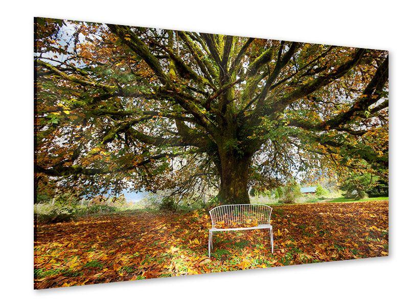 Acrylglasbild Mein Lieblingsbaum