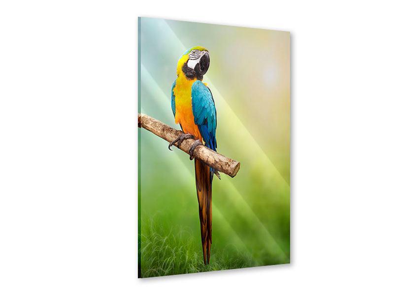 Acrylglasbild Der Papagei