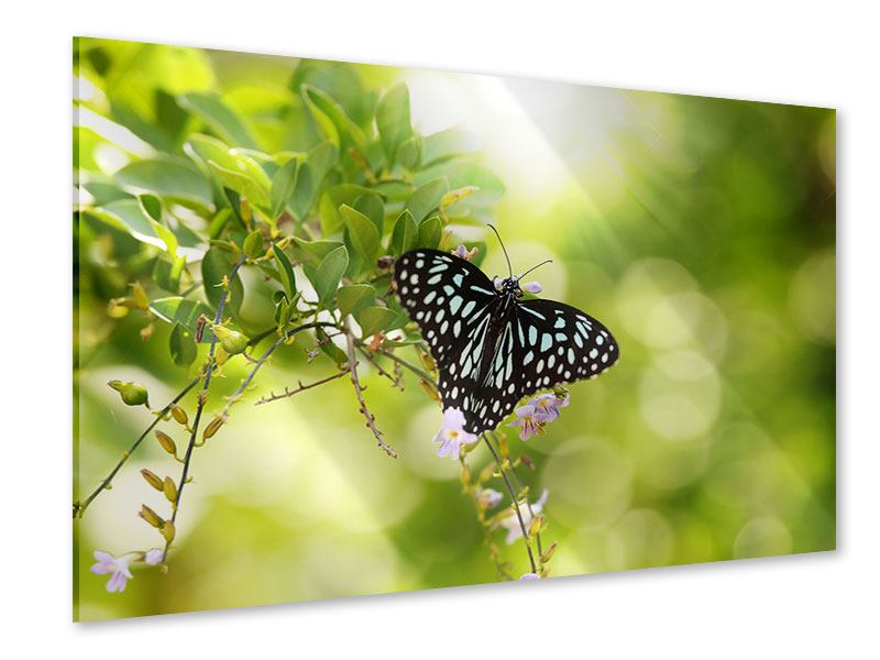 Acrylglasbild Papilio Schmetterling XXL