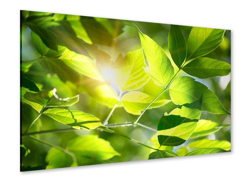Acrylglasbild Es grünt so grün