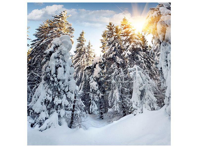 Acrylglasbild Tannen im Schnee