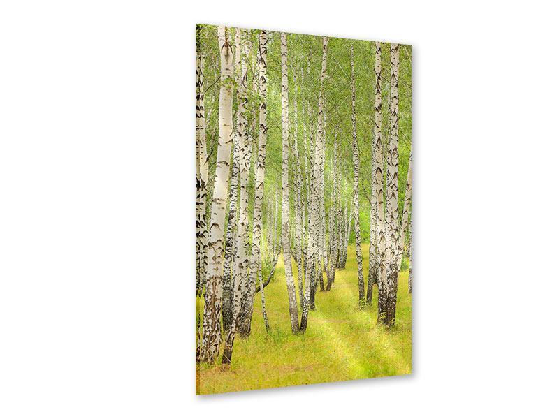 Acrylglasbild Der Birkenwald im Spätsommer