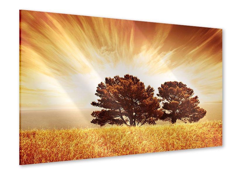 Acrylglasbild Bäume im Lichtspektakel