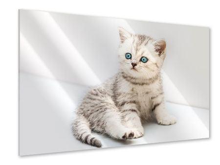 Acrylglasbild Katzenbaby