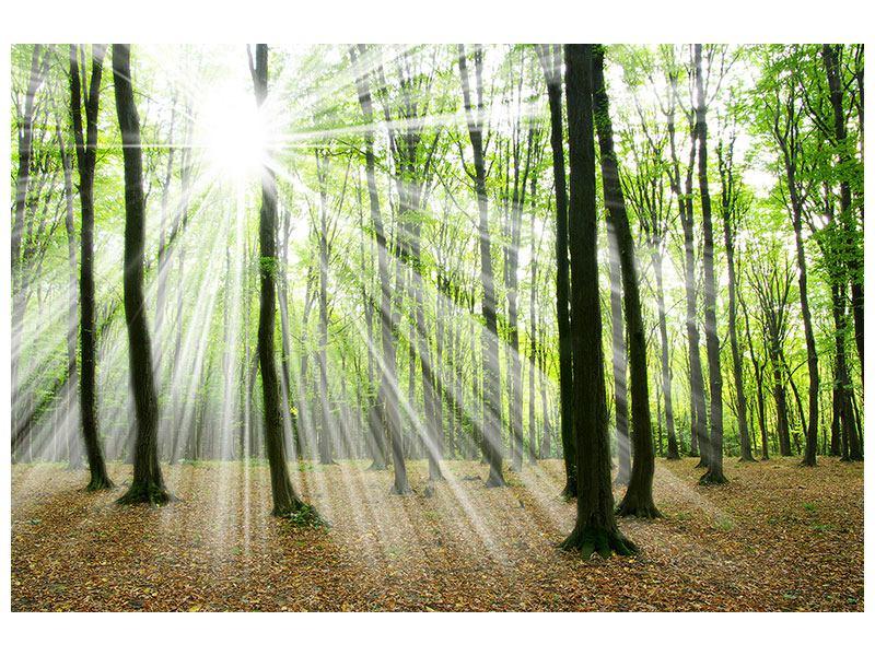 Acrylglasbild Magisches Licht in den Bäumen