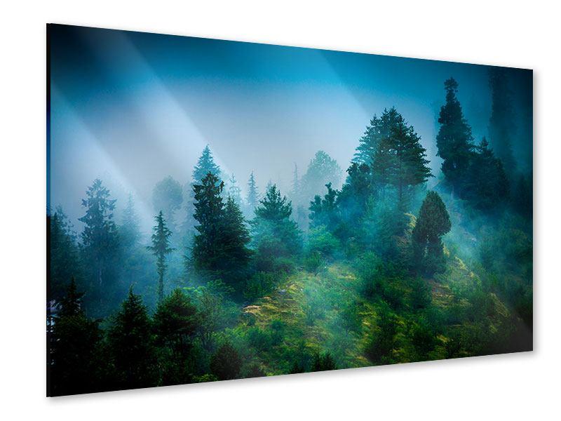 Acrylglasbild Geheimnisvoller Wald