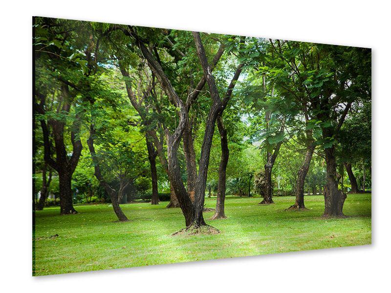 Acrylglasbild Kirschbaum-Garten