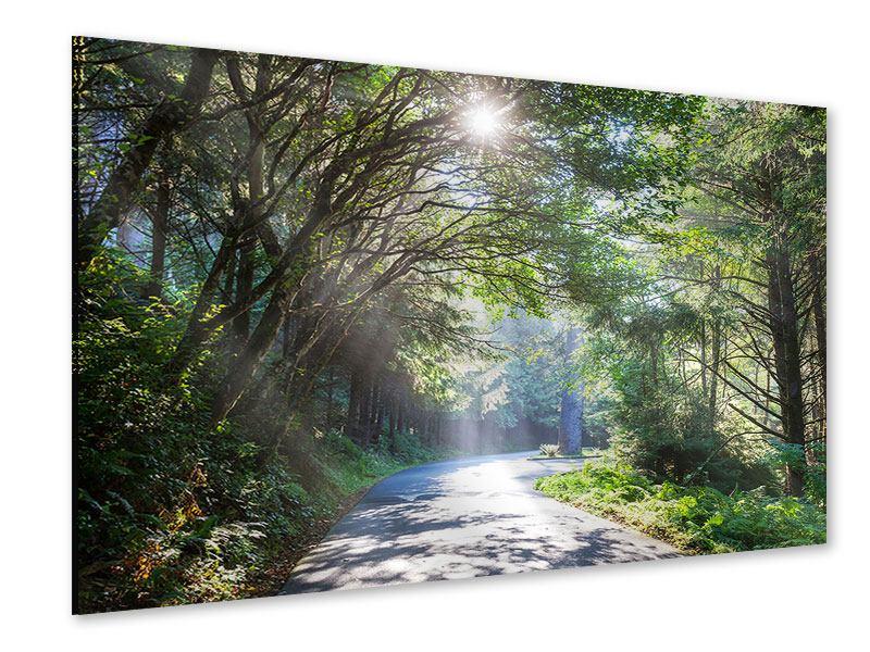 Acrylglasbild Sonniger Waldweg