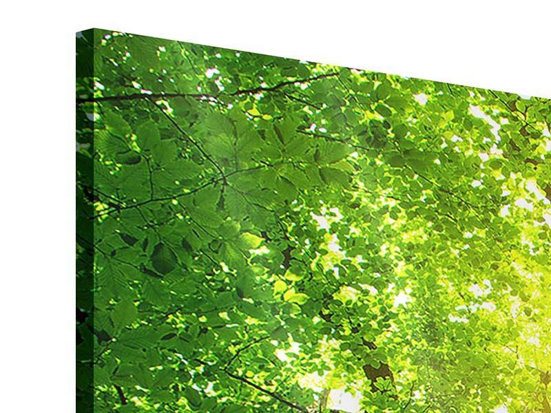 Acrylglasbild Baum
