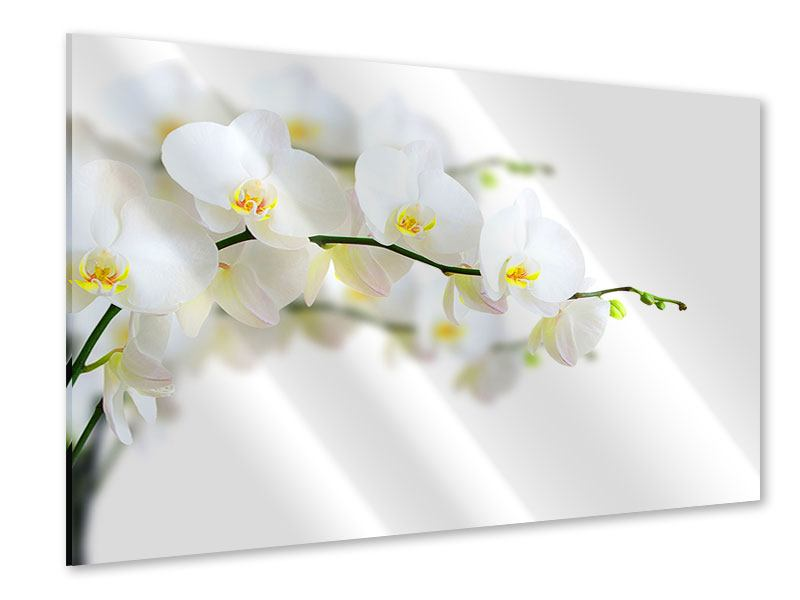 Acrylglasbild Weisse Orchideen