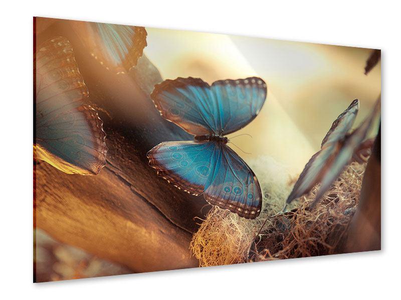 Acrylglasbild Schmetterlinge