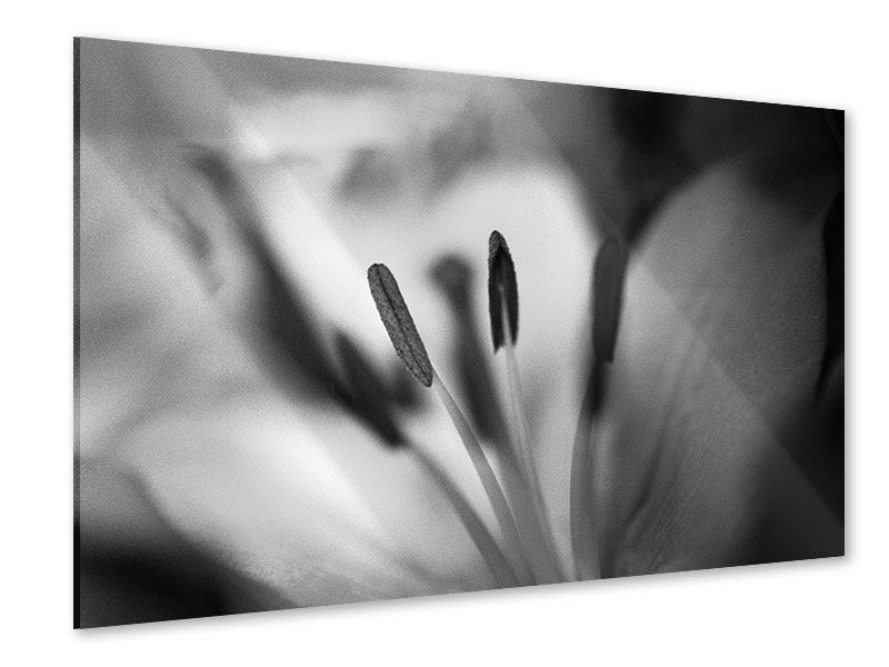 Acrylglasbild Makro Lilienblatt