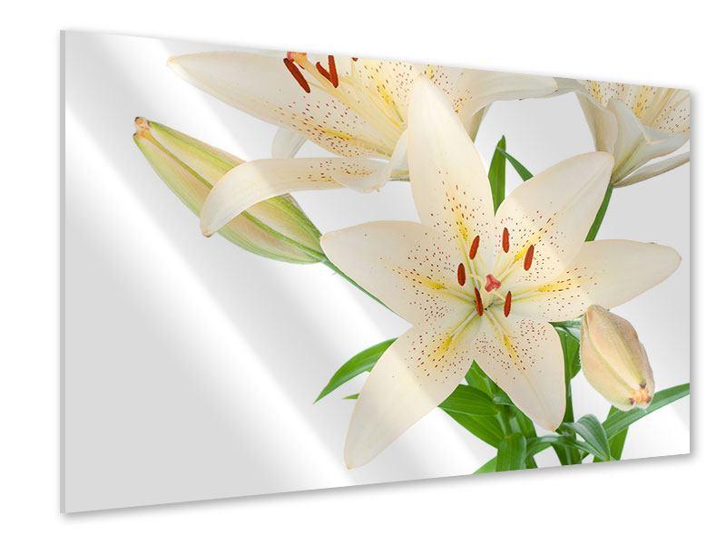Acrylglasbild Weisser Lilienstrauch