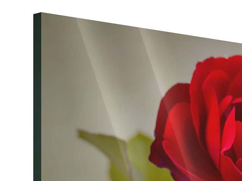 Acrylglasbild Drei rote Rosen