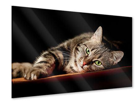 Acrylglasbild Entspannte Katze