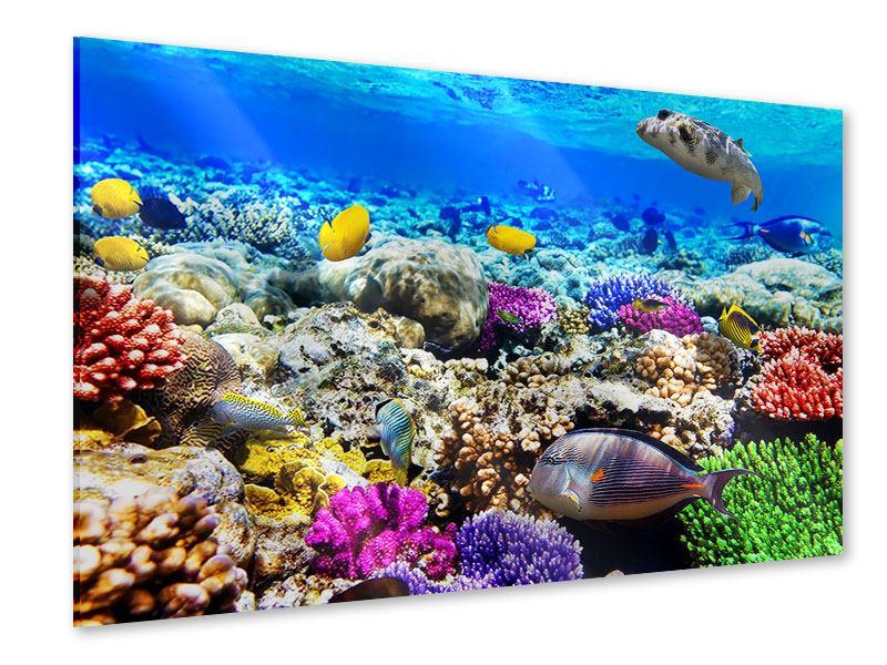 Acrylglasbild Fischaquarium