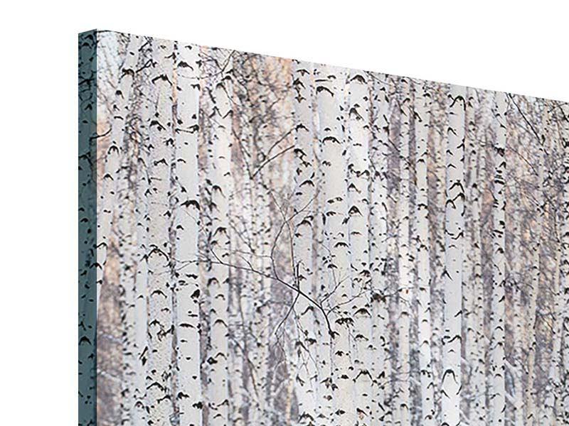 Acrylglasbild Der Birkenwald im Winter