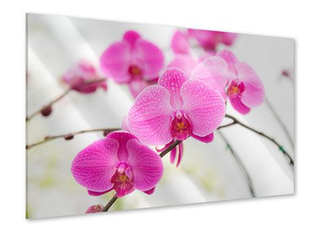 Acrylglasbild Das Symbol der Orchidee