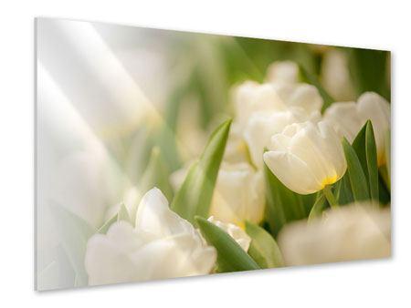 Acrylglasbild Tulpenperspektive