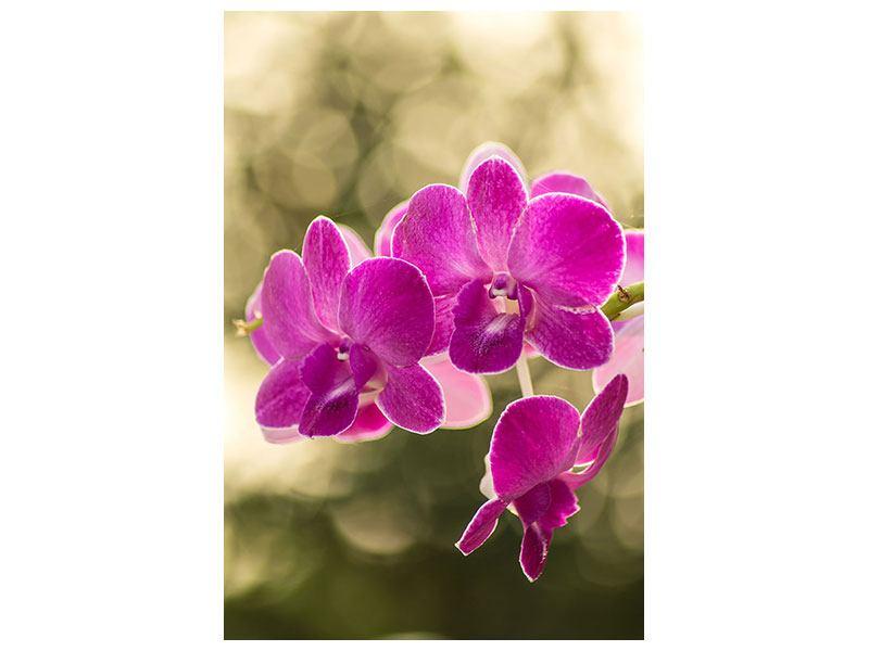 Acrylglasbild Orchideen Violett