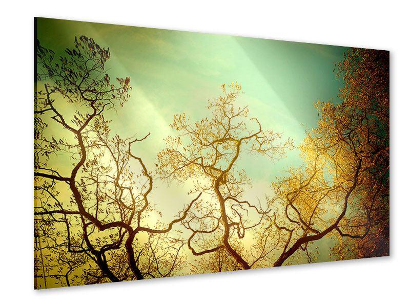 Acrylglasbild Bäume im Herbst