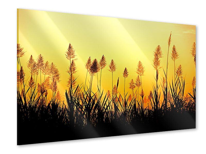 Acrylglasbild Die Blumen des Feldes