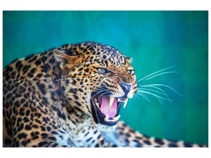 Acrylglasbild Achtung Leopard