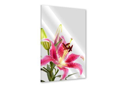Acrylglasbild Lilie Pretty in Pink