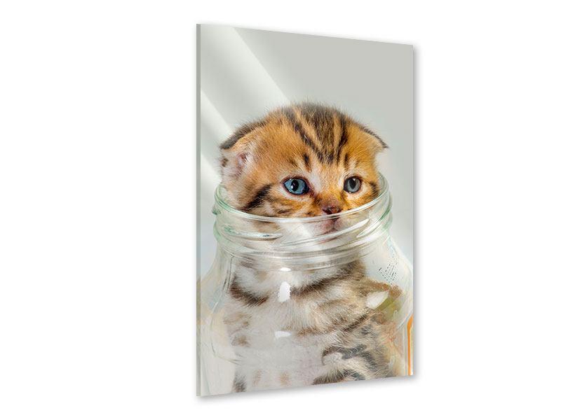 Acrylglasbild Faltohrkatzenbaby