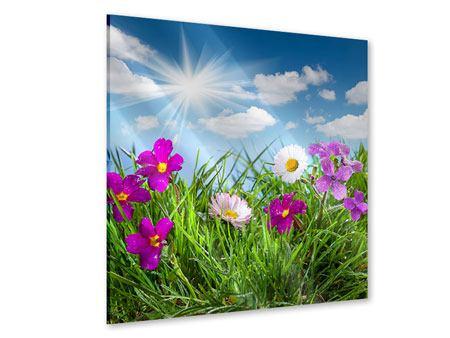 Acrylglasbild Blumenwiese