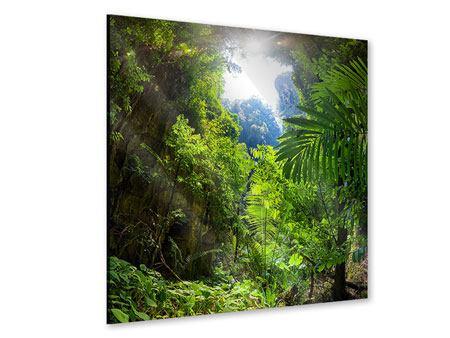 Acrylglasbild Lichtung im Dschungel