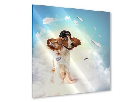 Acrylglasbild Flying Dog