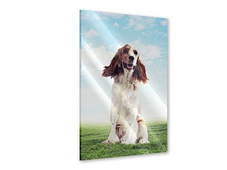Acrylglasbild Funny Dog