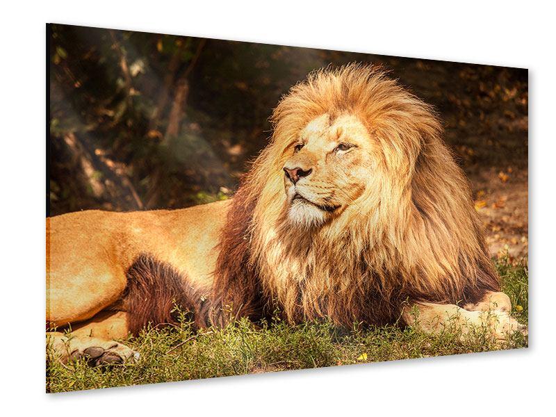 Acrylglasbild Löwe