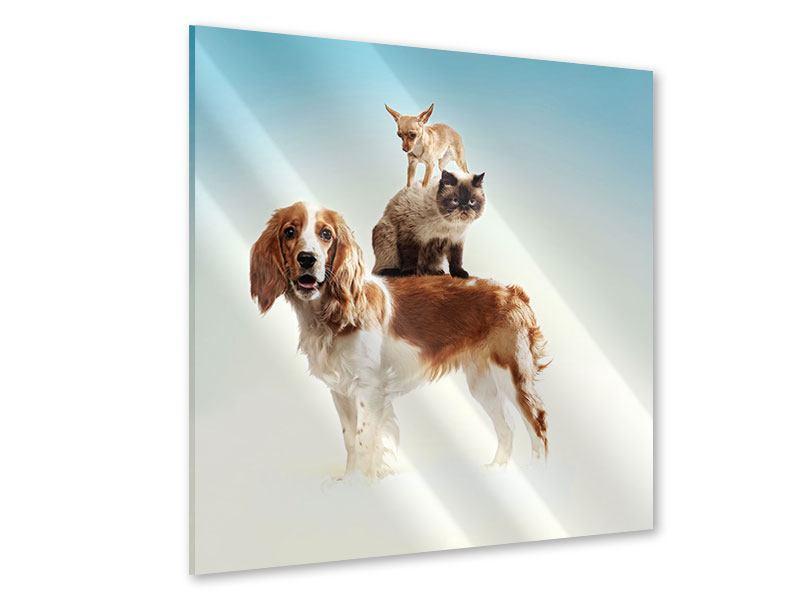 Acrylglasbild Tierstapel